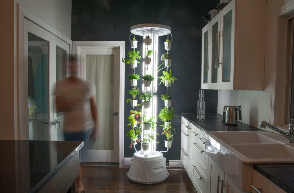 Hydroponic Designs Advantages Of Hydroponic Systems