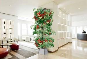 Hydroponic Tower, indoor gardening