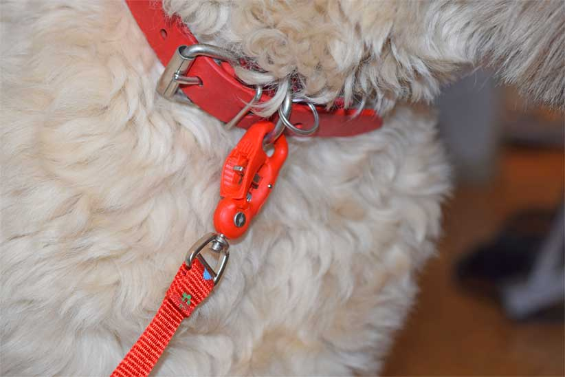 The Cleash: Safe and strong pet snap that engages with a simple click