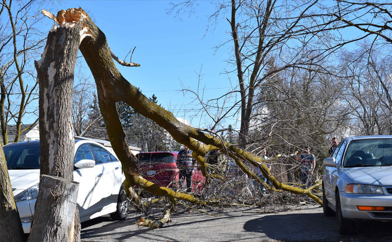 Tree misses Parked cars