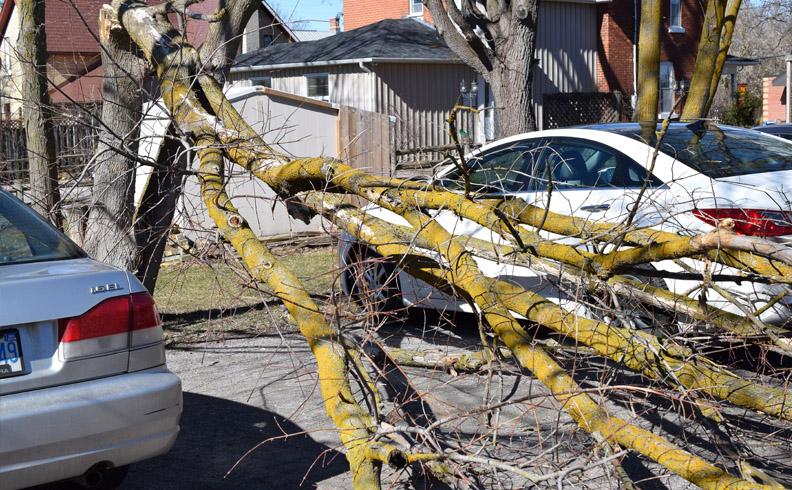Tree misses Industrial Designer car
