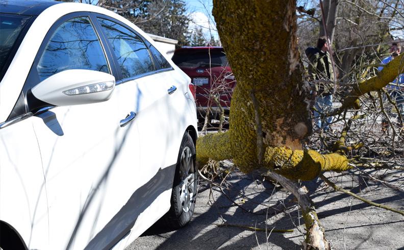 Fallen Tree doesnt even scratch the car