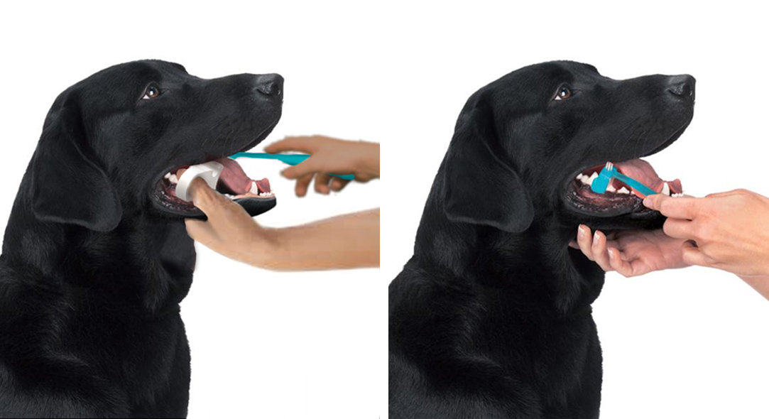 Best way to clean or brush your dog's teeth