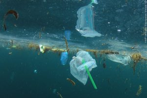 Ocean pollution, Plastic straws, carrier bags, pollution in ocean