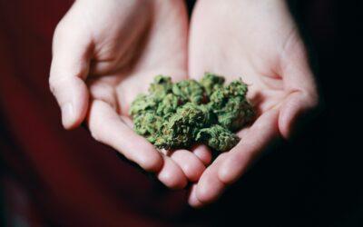 Cannabis Product Development Company